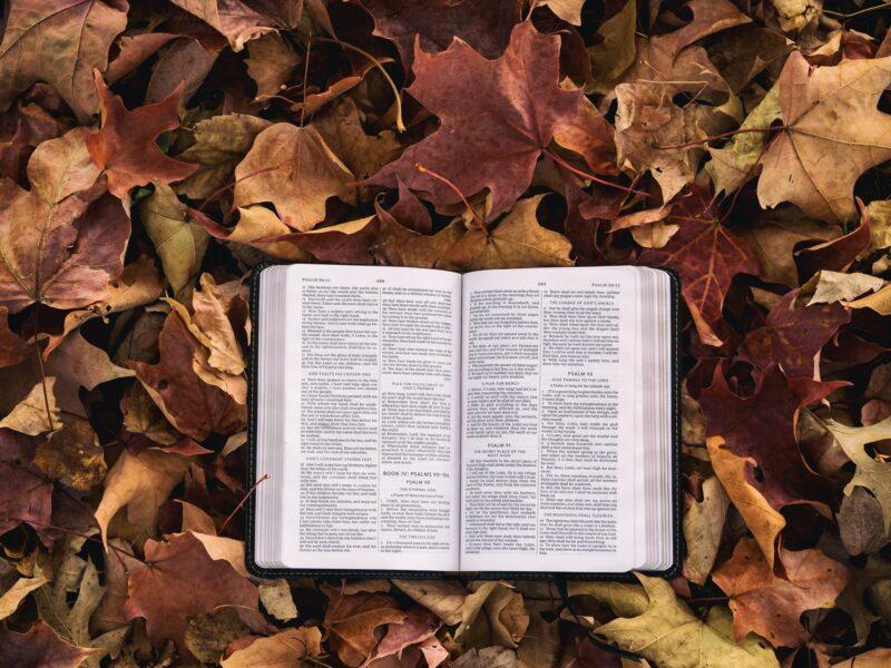 【読書】何を読めばいい?と迷っている方必見!きっと見つかる本選びのコツ7選